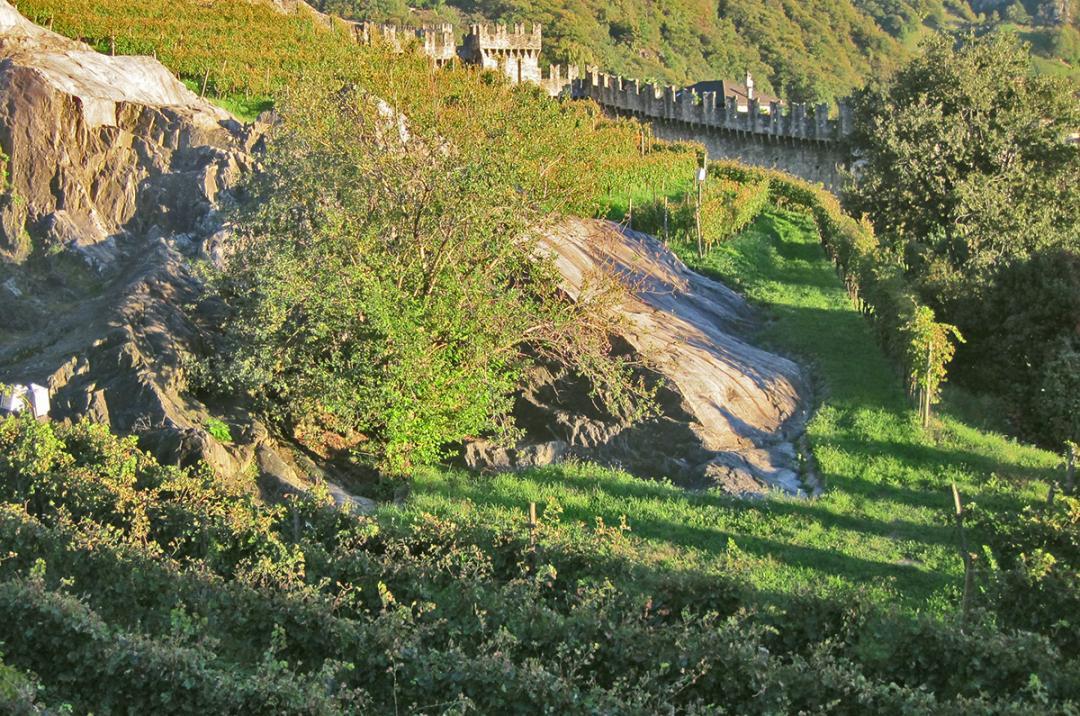 Vineyard in Bellinzona, Ticino, Switzerland